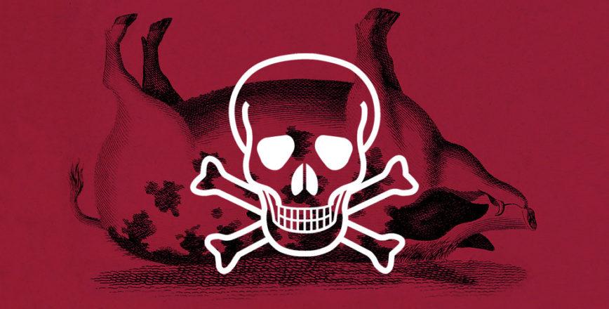 How to kill a pig – Jonathan Wilcock Freelance Senior Copywriter